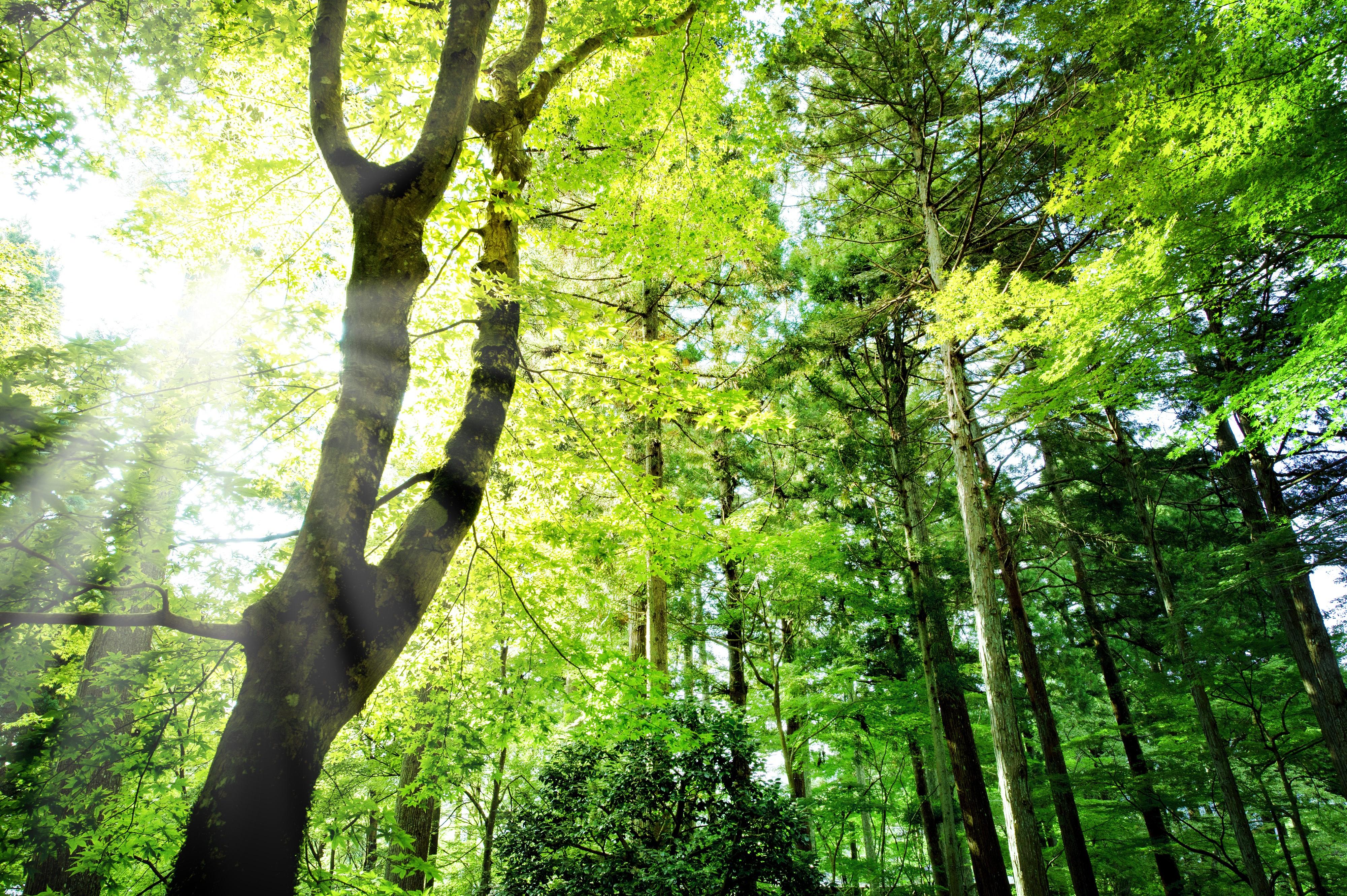 お墓物語パート3(樹木葬ツアー)