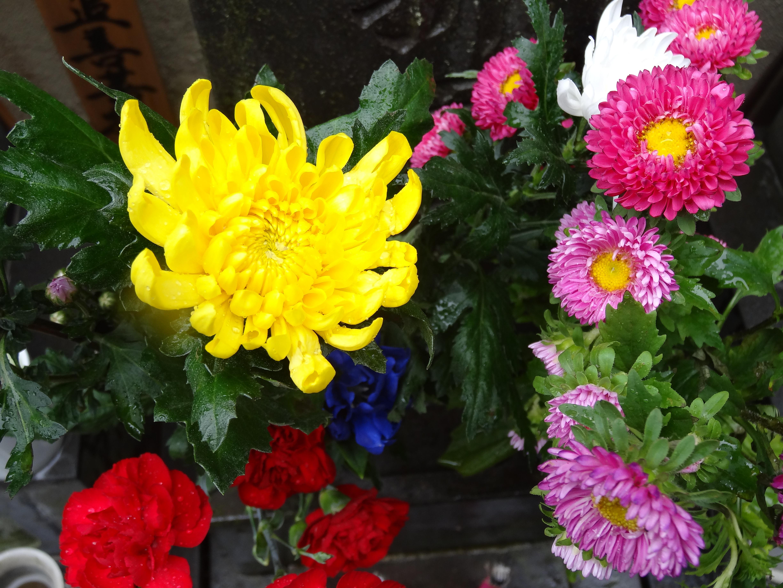 仏花と花言葉